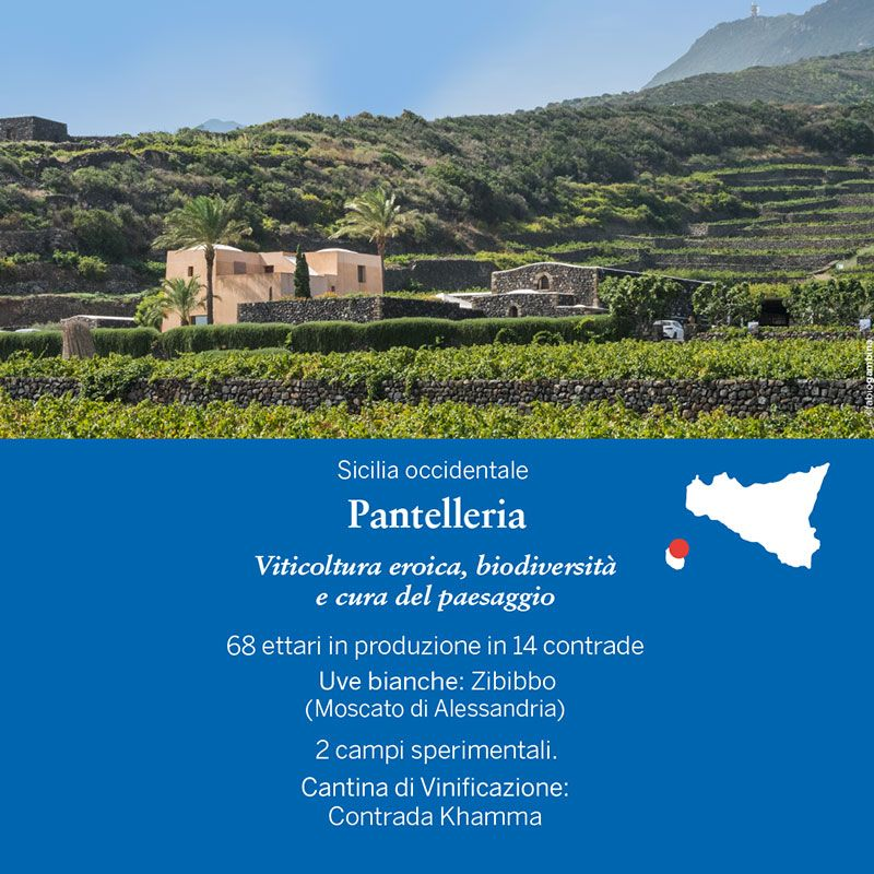Cartolina da Pantelleria - Cassetta legno Donnafugata